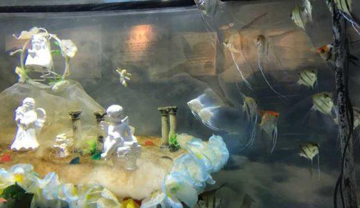 さいたま水族館の料金と食事・軽食のメニューは何があるの?