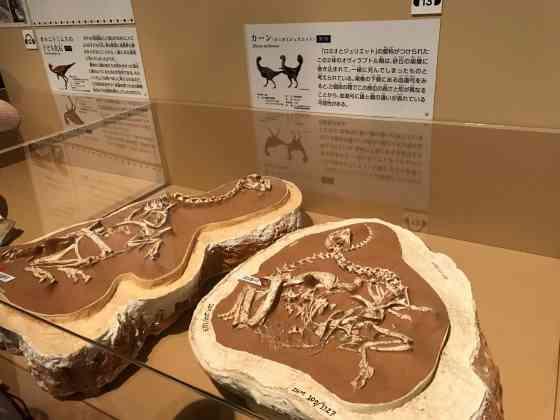 恐竜博 国立科学博物館